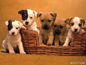 Puppy-Wallpaper-dogs-7013331-1024-768